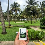 @instagram: // palm trees & ocean breeze ????