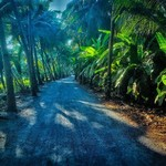 @instagram: #India#????????#Goa#Betalbatim#JungleRoad#????????????