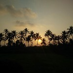 majorda india goa nature sunset trees holi church
