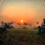 benaulim india goa morning sunrise trees