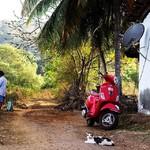 @instagram: village life . . . #goa #village #goavillage #goalife #cat #bke #scooter #fisher #fishermen #house #palms #summer #vespa #siolim #fisherhouse #inthevillage #road #india #indiavillage #cowboy #asia #asiavillage #vilage #гоа #деревня #рыбак #котик