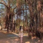@instagram: #goa #anjuna #dreds #цветочныебудниариши