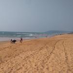 @instagram: Индийский закатный вид с кажущегося бесконечным калангутского пляжа, крошечный буйвол вдали - бонус???????????????????? #безфильтров #india #sunset #calangute #goa #indiansunset #beach #калангут #гоа #индия #закат #пляж #отпускблизок