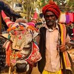 @instagram: Holy cow . . . . #anjuna #anjunafleamarket #sacredcow #goa #india