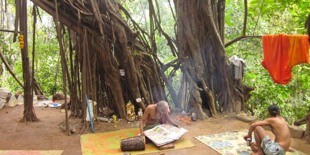 Arambol Banyan Tree